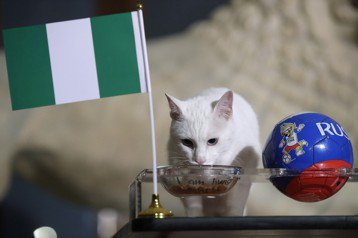 梅西要哭了 「俄羅斯神貓」預測未失手選奈及利亞贏