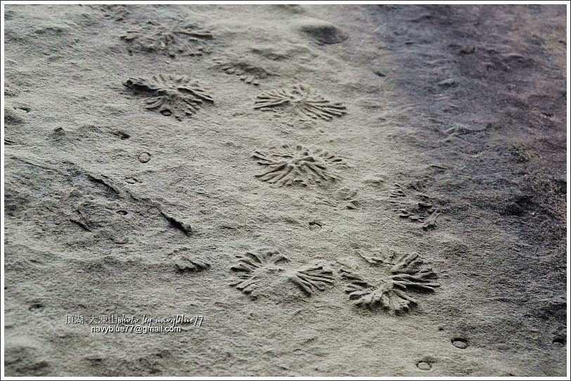 ↑觀音石壁上的生痕化石。