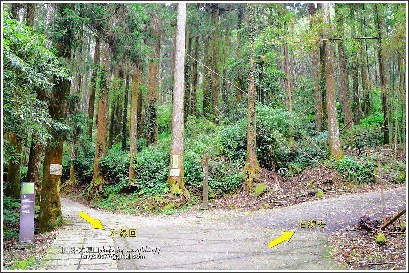↑O形步道左右線叉路口,布魯建議右去左回。