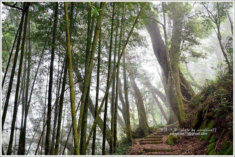 ↑霧中的竹林另有朦朧美。