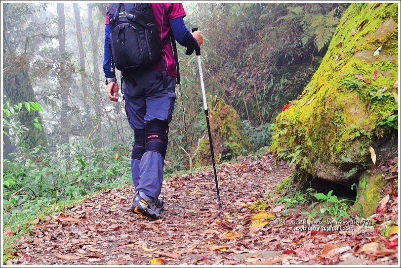 ↑部分路段舖上落葉,走起來像地毯。