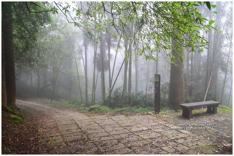 ↑牛樟巨石叉路取左回頂湖觀音石。