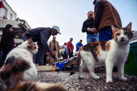 土耳其的民生經濟問題,成為選戰中在野黨攻擊的目標。圖為土耳其漁市。 圖/法新社