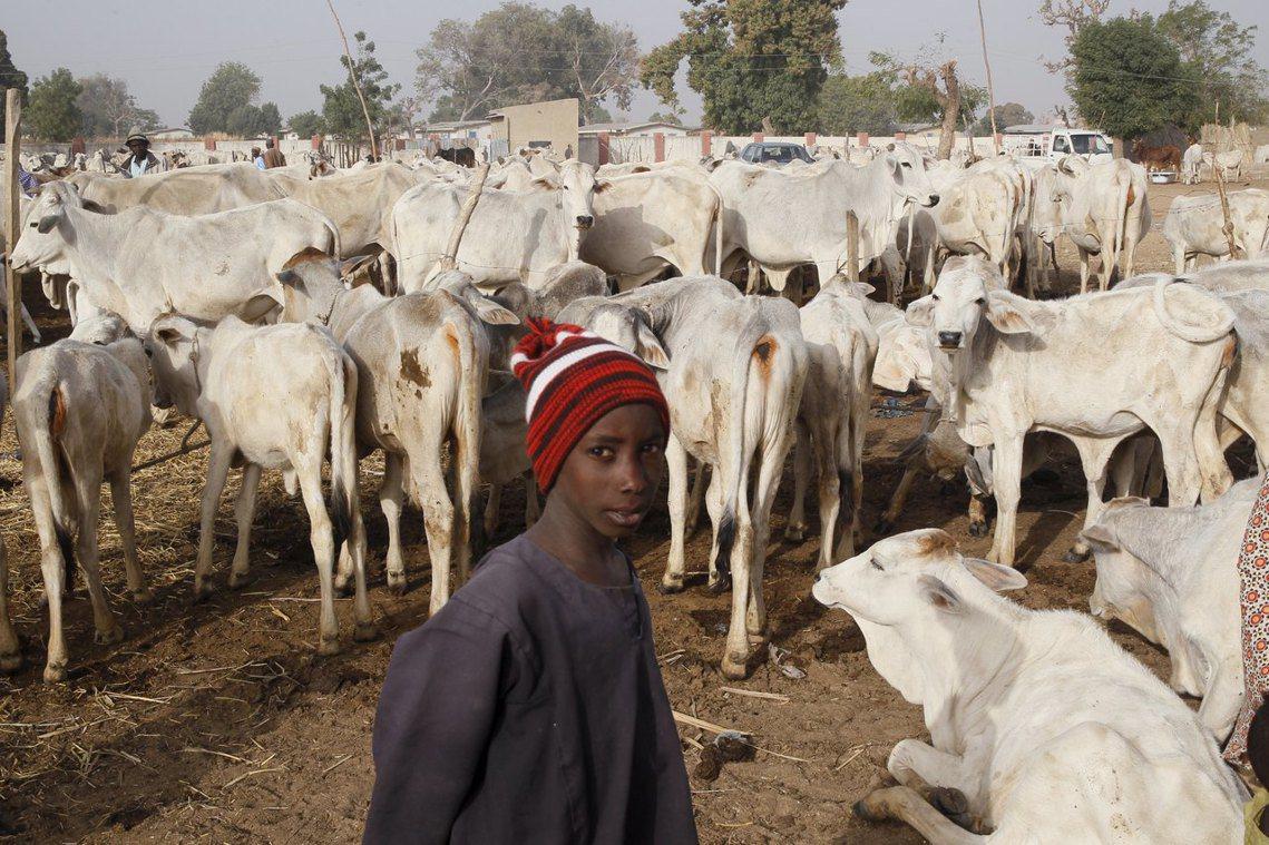 奈及利亞北部的游牧民族——富拉尼——常被認為是造成農牧衝突的挑事者。 圖/路透社