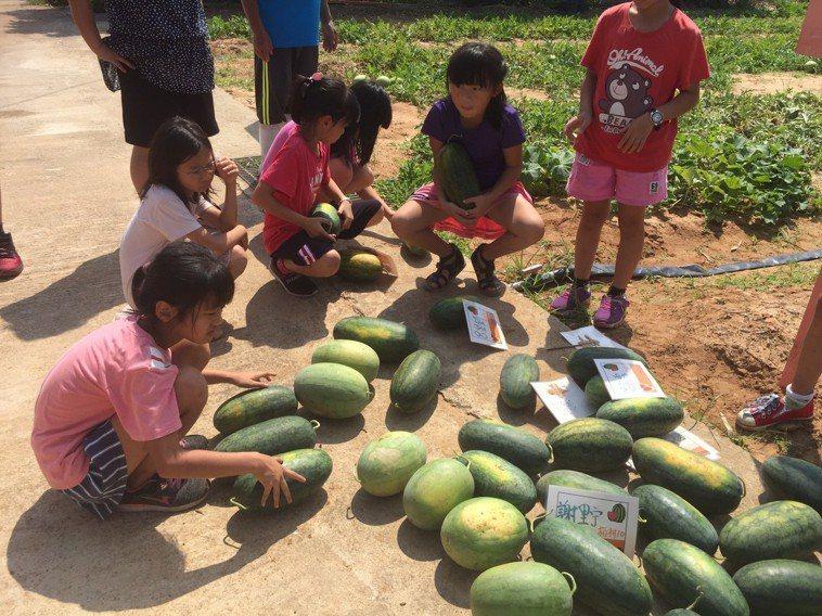 小朋友把採收下來的西瓜堆置在一起。記者蔡家蓁/攝影