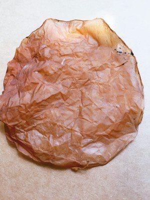 菌媽媽乾燥後,就會像撕不破的牛皮紙。 圖╱朱慧芳