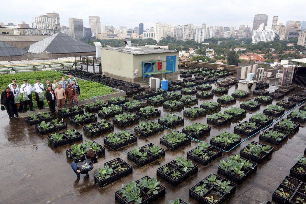 在地食材促進了小規模農業的發展,也使許多空地被改造成社區菜園,用怡人的綠意改善都市景觀。 圖/路透社