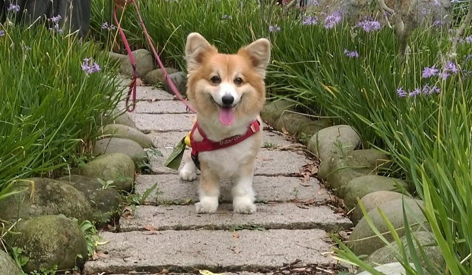 最新「門外犬行為危機指數大調查」指出,逾六成家犬未定期投藥暴露於犬心絲蟲與寄生蟲...