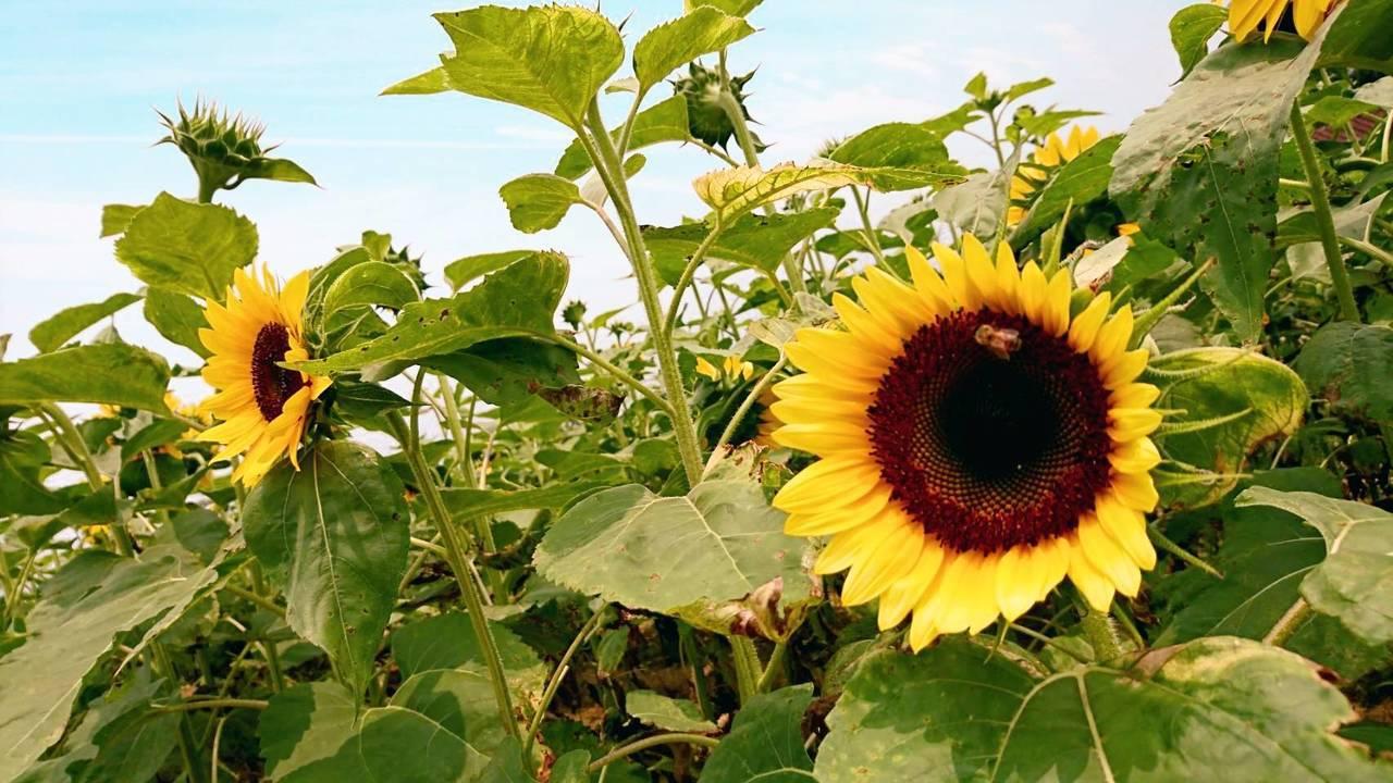 ▲桃園蓮花季-向陽農場。(圖/Tripbaa趣吧!亞洲自由行專家)