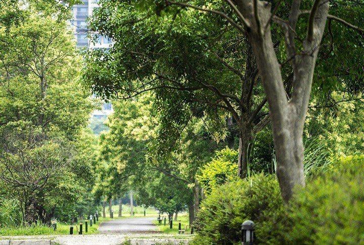 竹北文興綠園道綠意濃密實景拍攝 業者/提供。