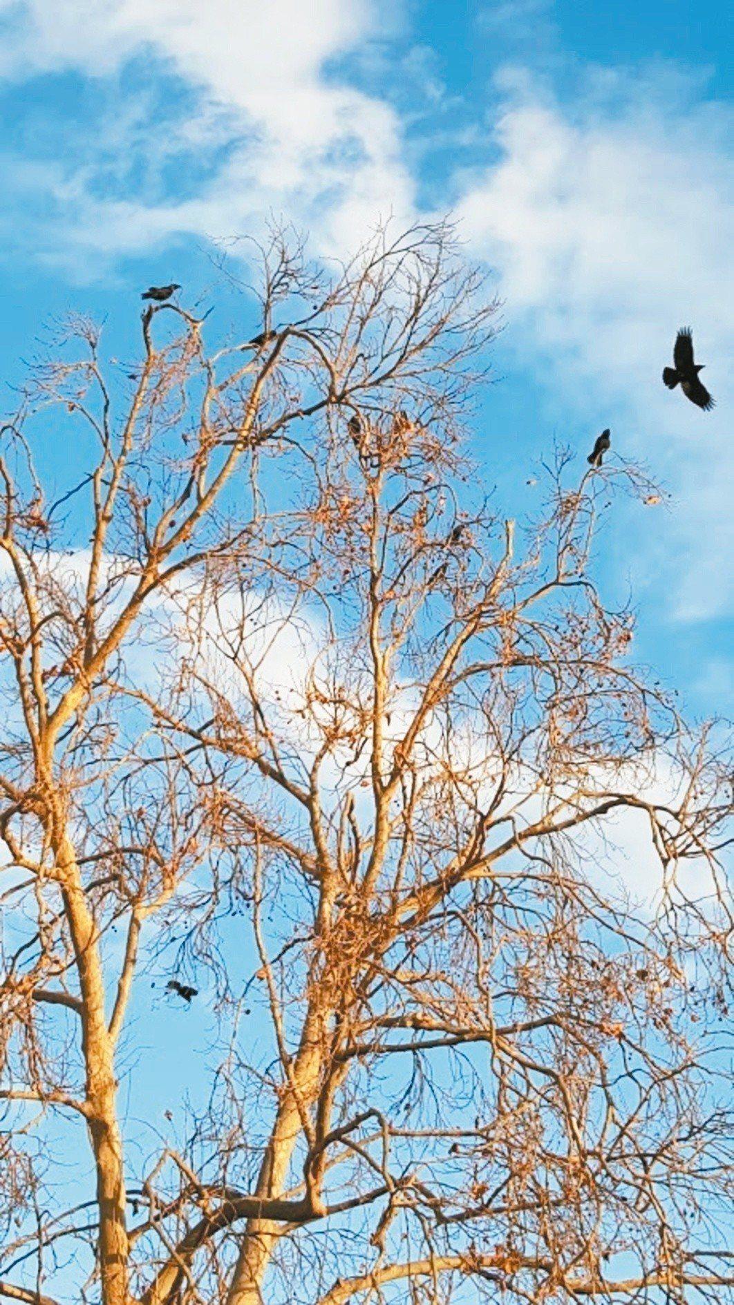 翻過後山下坡面對谷地,經常驚起一隻隱身近旁樹上的鷂鷹,乍然低空掠過眼前,停到路對...