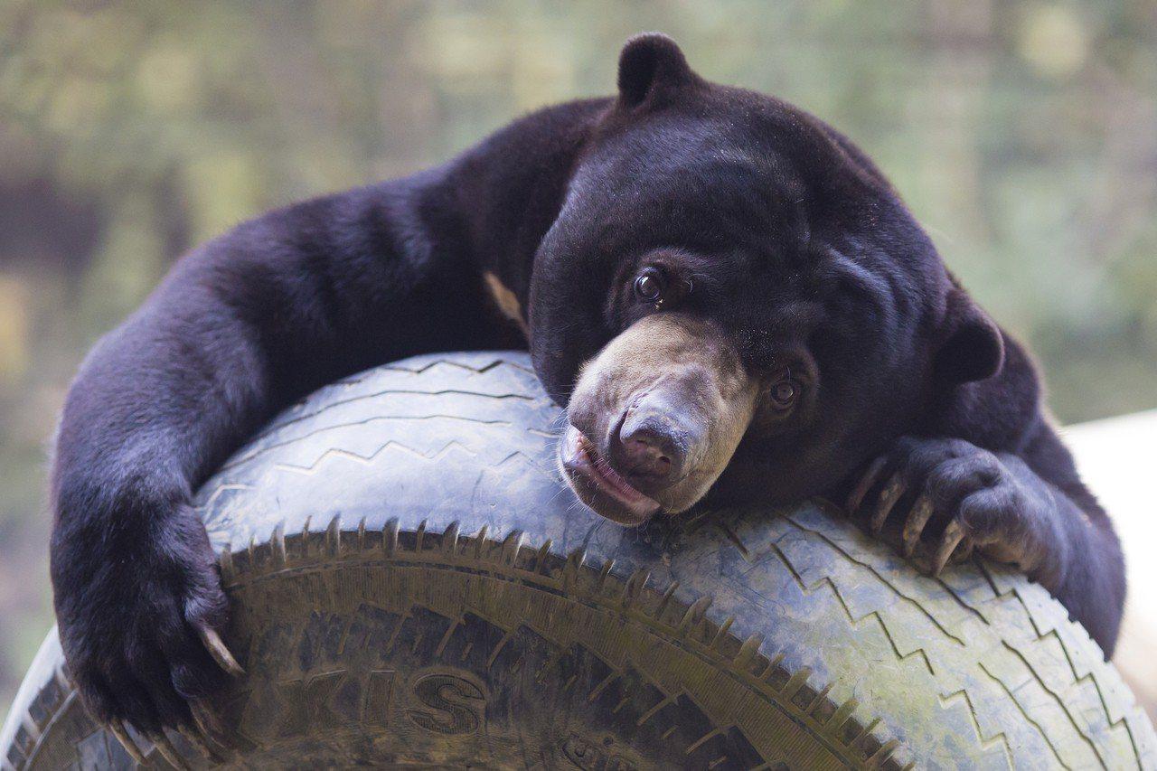 熊。圖/ingimage