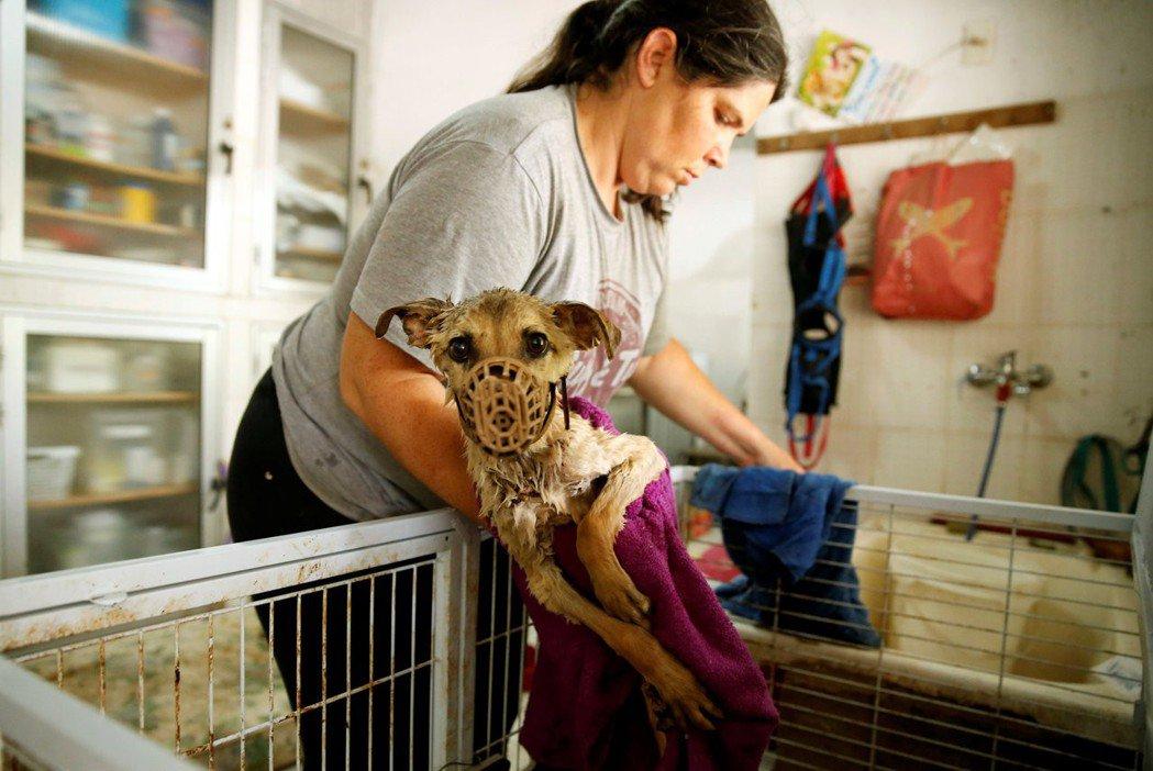 如果我們將眼光放在動物的遭遇本身,就會發現,只要有人的地方,就有各種不當甚至殘酷...