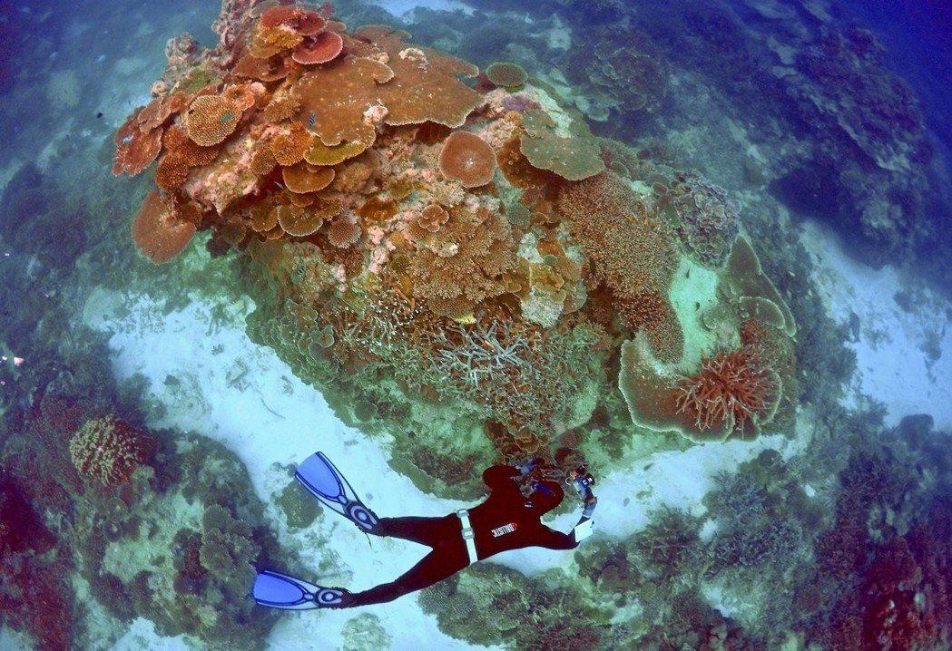 在過去的3年間,世界上有五分之一的珊瑚礁已經消失。圖攝於澳洲的埃里奧特夫人島。圖...