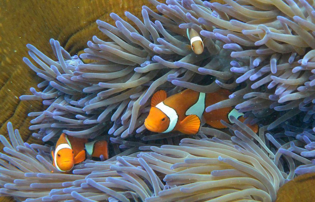 圖攝於澳洲大堡礁。圖/法新社