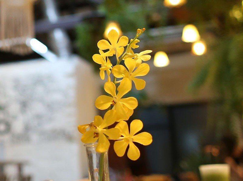 綠手指TIP|「黃千代蘭」喜高溫,花色變化多,以泰國培育最為成功。從幼苗開始種植...