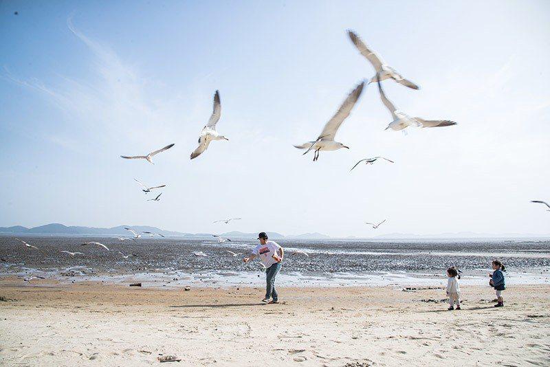 東幕海邊以與海鷗欣賞日落、露營或野餐有名
