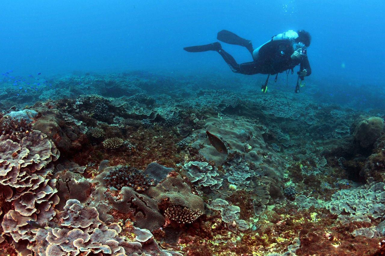 基隆市潛水教練王銘祥,昨天在象鼻岩海域附近發現十個藍球場大的「玫瑰花園」,美呆了...