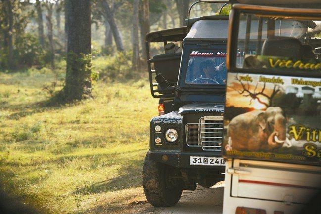 到YALA國家公園,每天兩次搭乘吉普車的生態探險之旅。 圖/MT、各業者提供