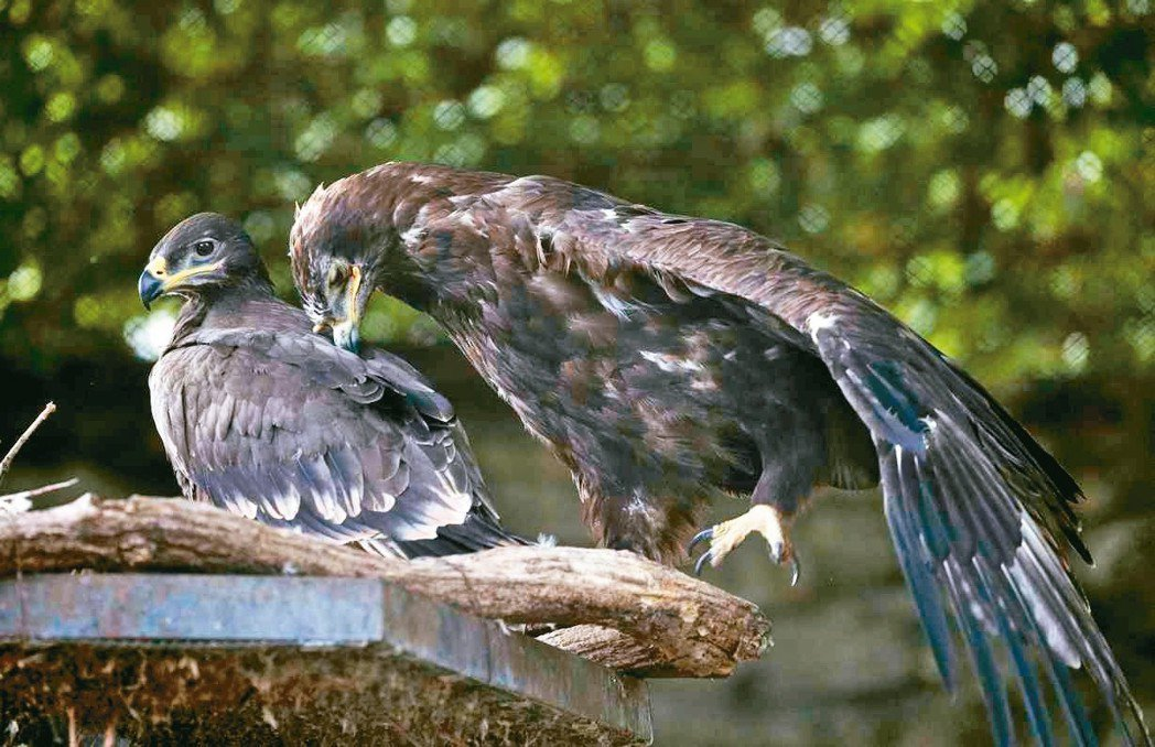 為了表揚在16強賽PK大戰表現搶眼的門將阿金費耶夫,莫斯科動物園以他的名字為幼鷹...