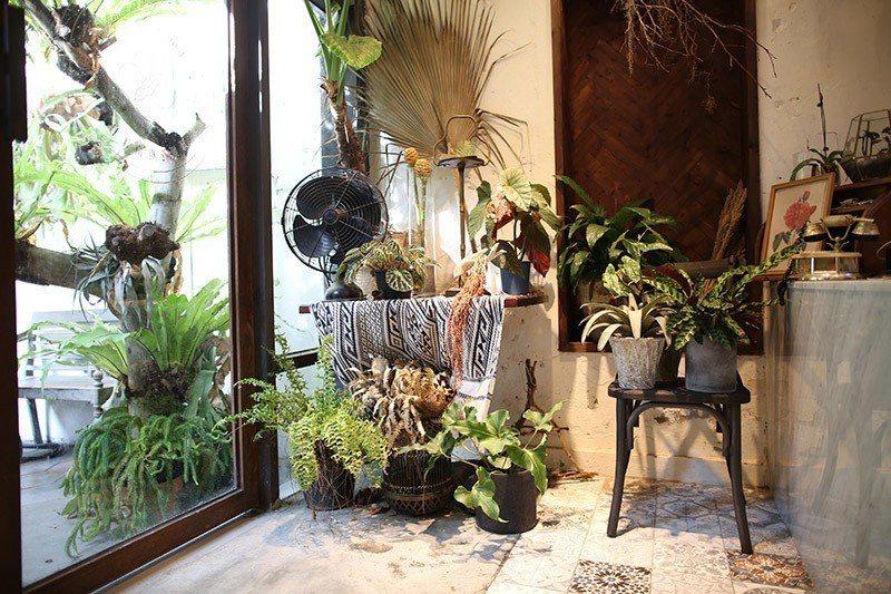 隱身在佈置中的大同電扇與植栽們,讓人看了就透心涼