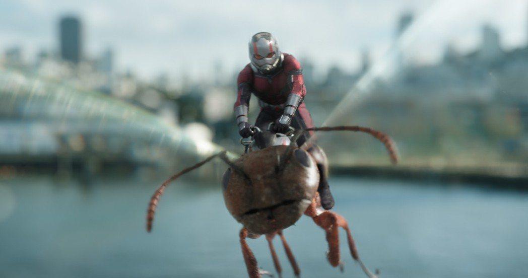 「蟻人與黃蜂女」特效相當驚人。圖/博偉提供