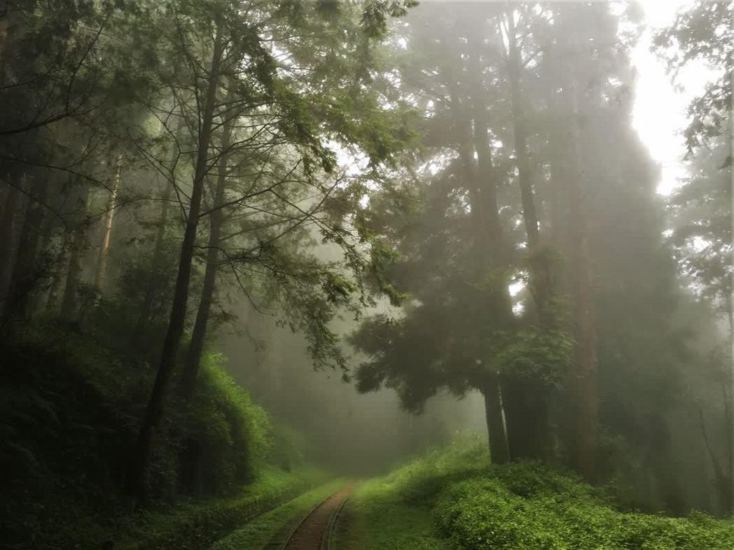 ▲阿里山旅遊-水山巨木。(圖/Tripbaa趣吧!亞洲自由行專家)