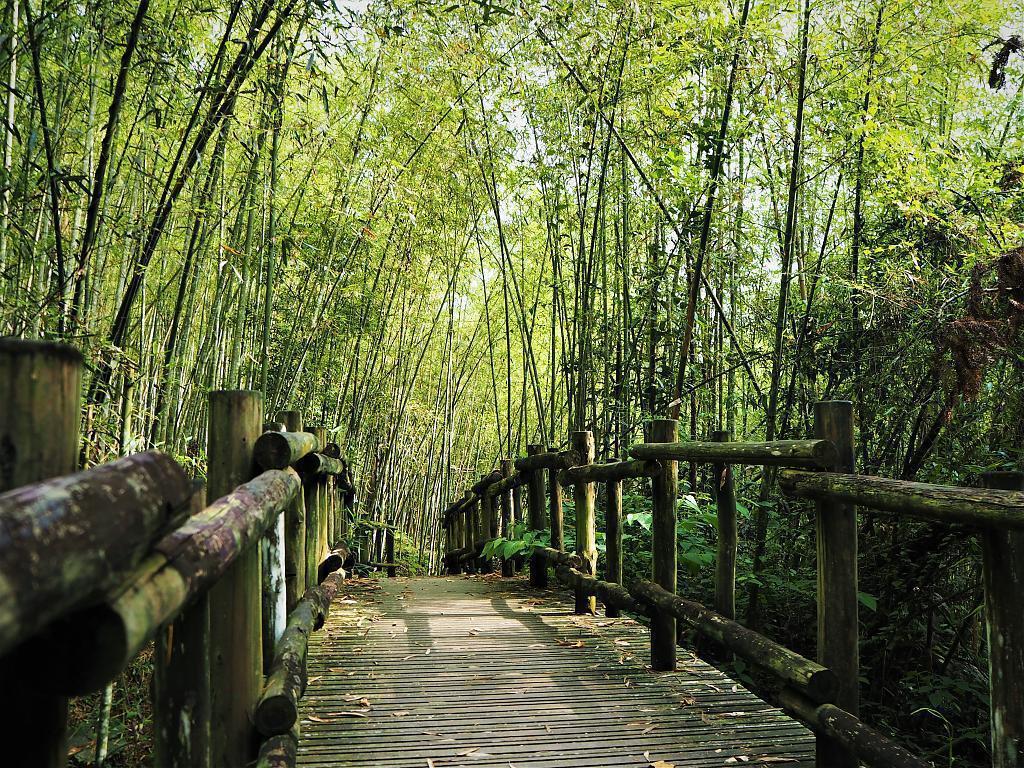 ▲阿里山旅遊景點-迷糊步道。(圖/Tripbaa趣吧!亞洲自由行專家)