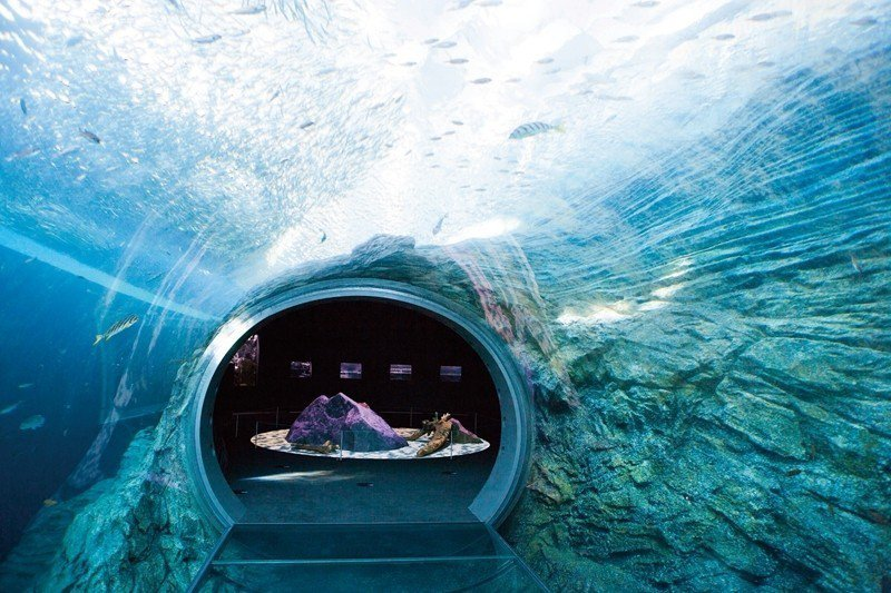 自然光能直接照射至水中隧道,周圍就是多樣的海洋生物自在悠游,浪漫無比。