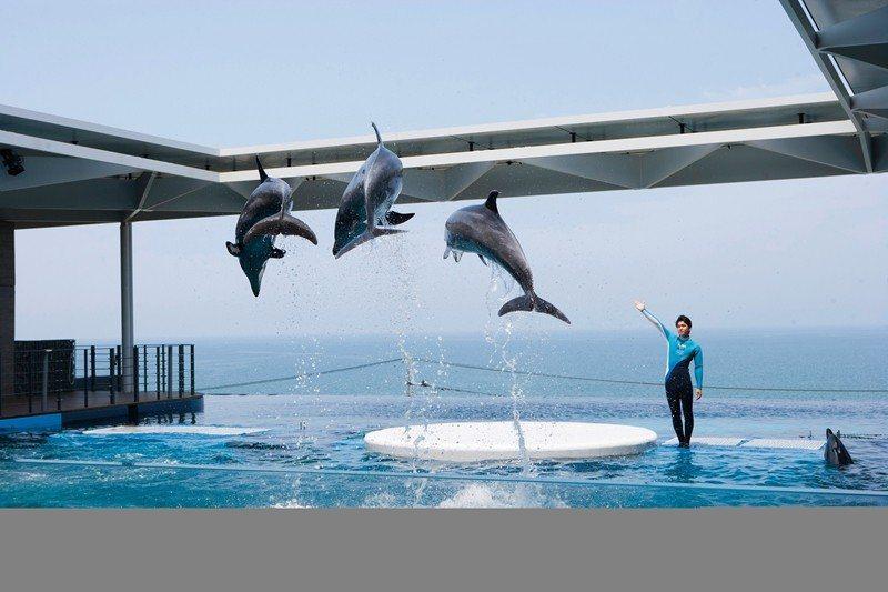 海豚表演舞台後方就是一望無際的日本海,視野一流。