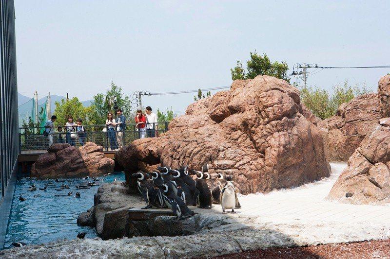 坐擁世界最多數量的麥哲倫企鵝,可愛的模樣能就近欣賞。