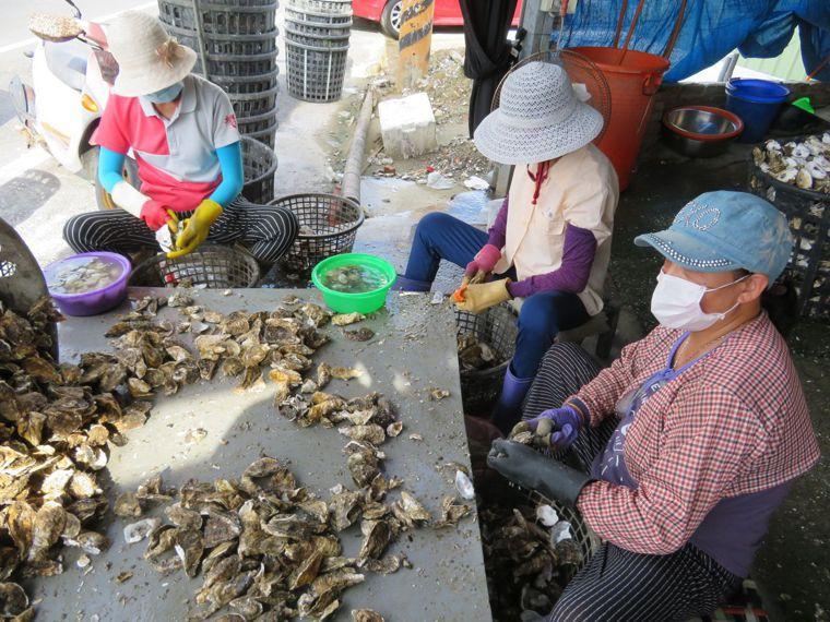 外傳,牡蠣的養殖業者會加上硼砂或雙氧水來殺菌保存,有害人體健康。聯合報系資料照/...
