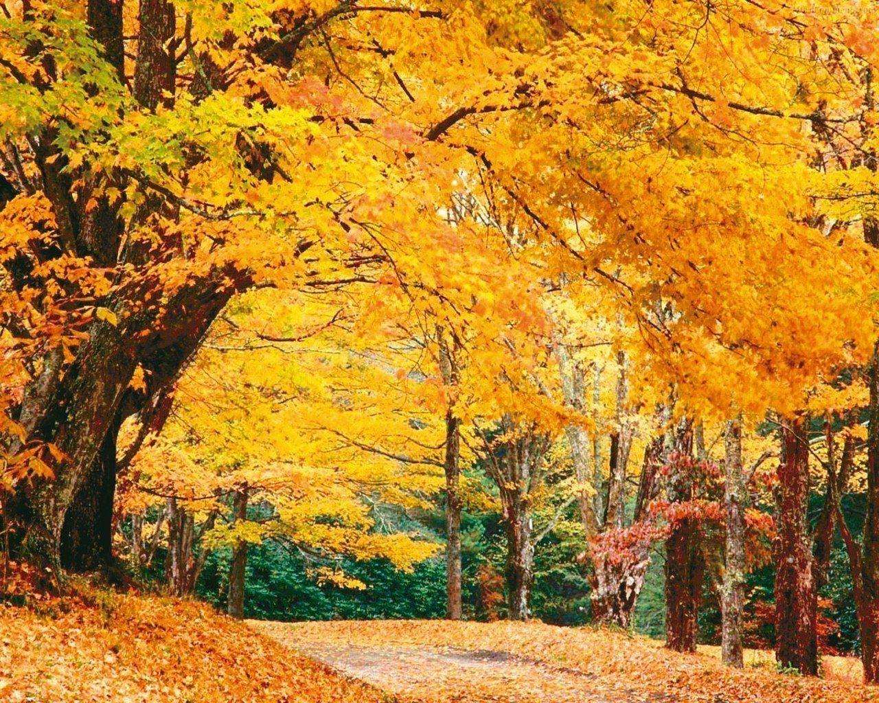 每年10月初是加拿大最佳賞楓季。 圖/有行旅提供