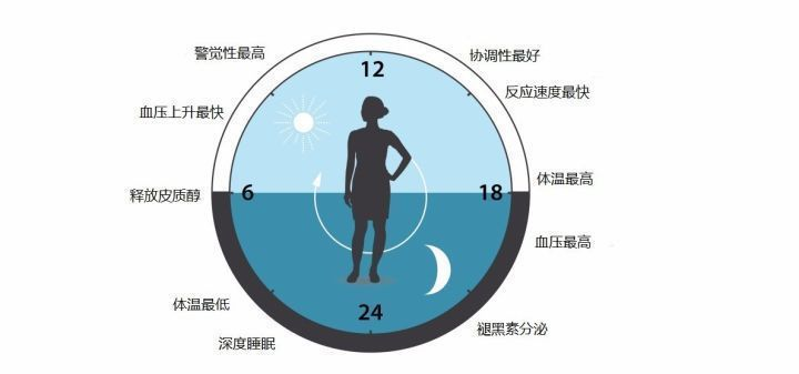 諾貝爾獎得主的研究結果,當作息和生理時鐘不一致時,罹患疾病的風險就會提高。圖取自...