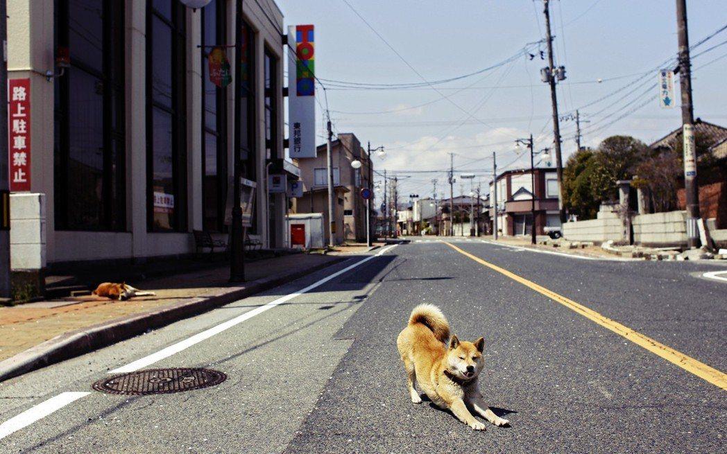 圖為2011年福島核災後,封鎖區內的流浪犬。 圖/美聯社