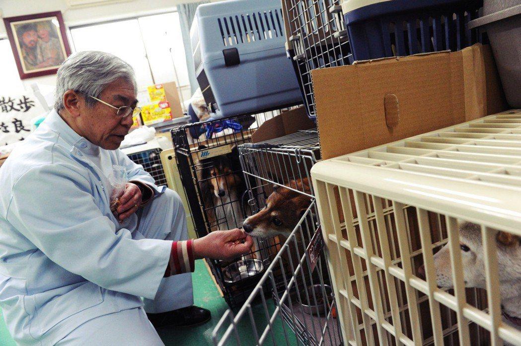在修法新增獸醫師的通報義務後,許多獸醫師在工作上碰到可疑案件卻沒有通報,除了顧慮...