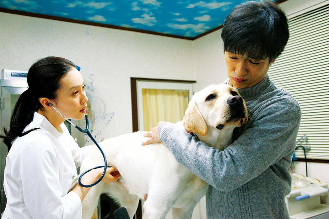 以往的實務上,在收容約1週後,貓狗就會被安樂死,這也是「第七日」的由來。 圖/電...