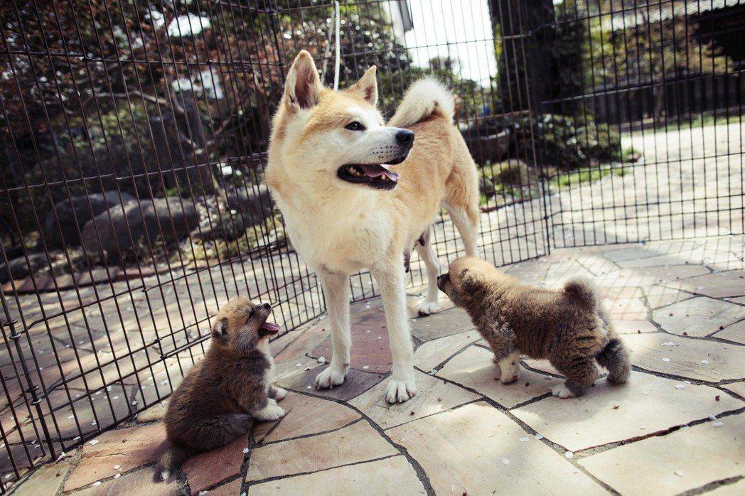 日本動保團體呼籲,應將展售貓狗的年齡下限,從7週改為8週,讓幼貓幼犬能在父母身邊...