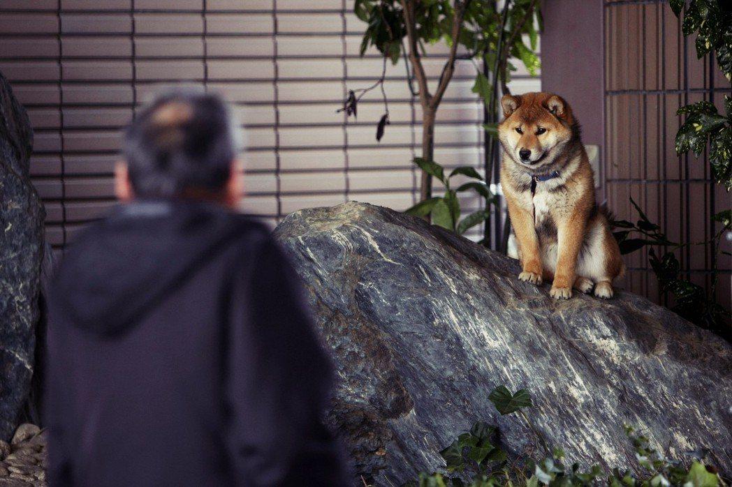 「只能說:人類們,請加油好嗎?」日本動保這條從民間發聲到遊說議員的路,少了強勢主...