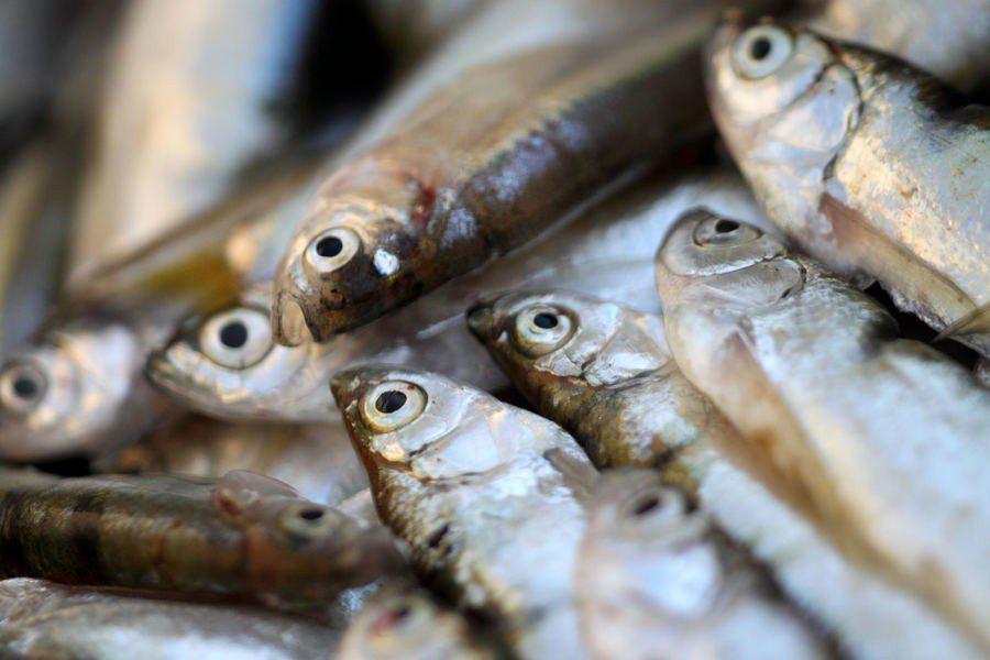 聯合國指出,養殖漁業將繼續成長,人類吃魚的數量也會增加。(Photo by _p...
