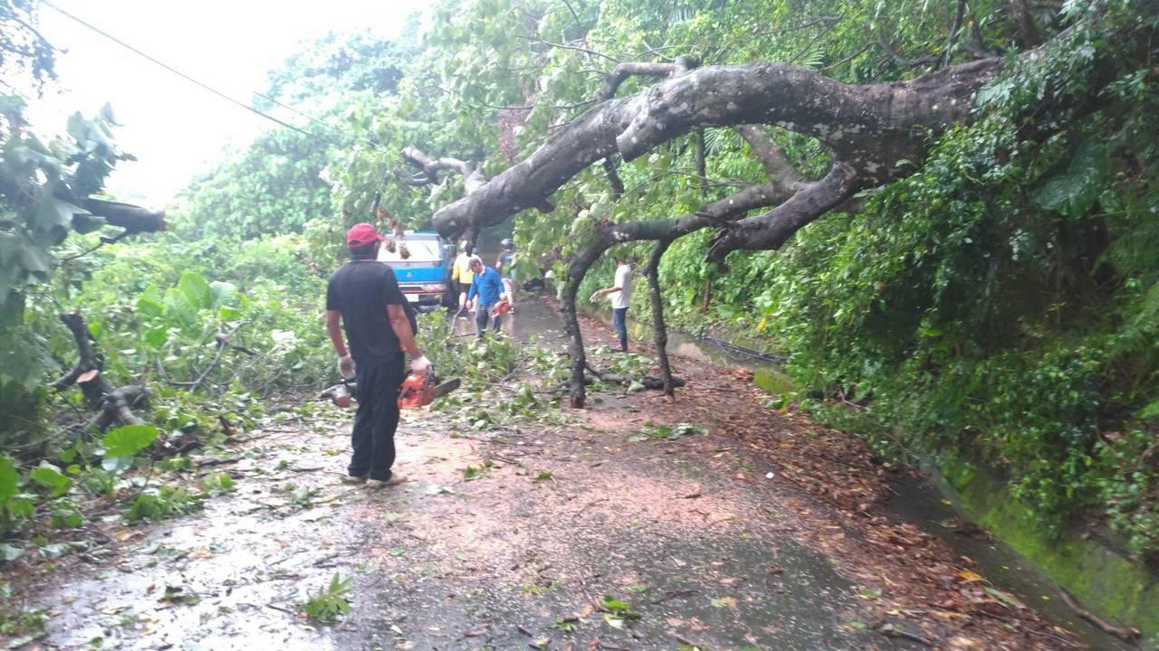 瑪莉亞颱風輕輕過,宜蘭災情小,頭城有路樹倒,鎮公所清理。圖/頭城鎮公所提供