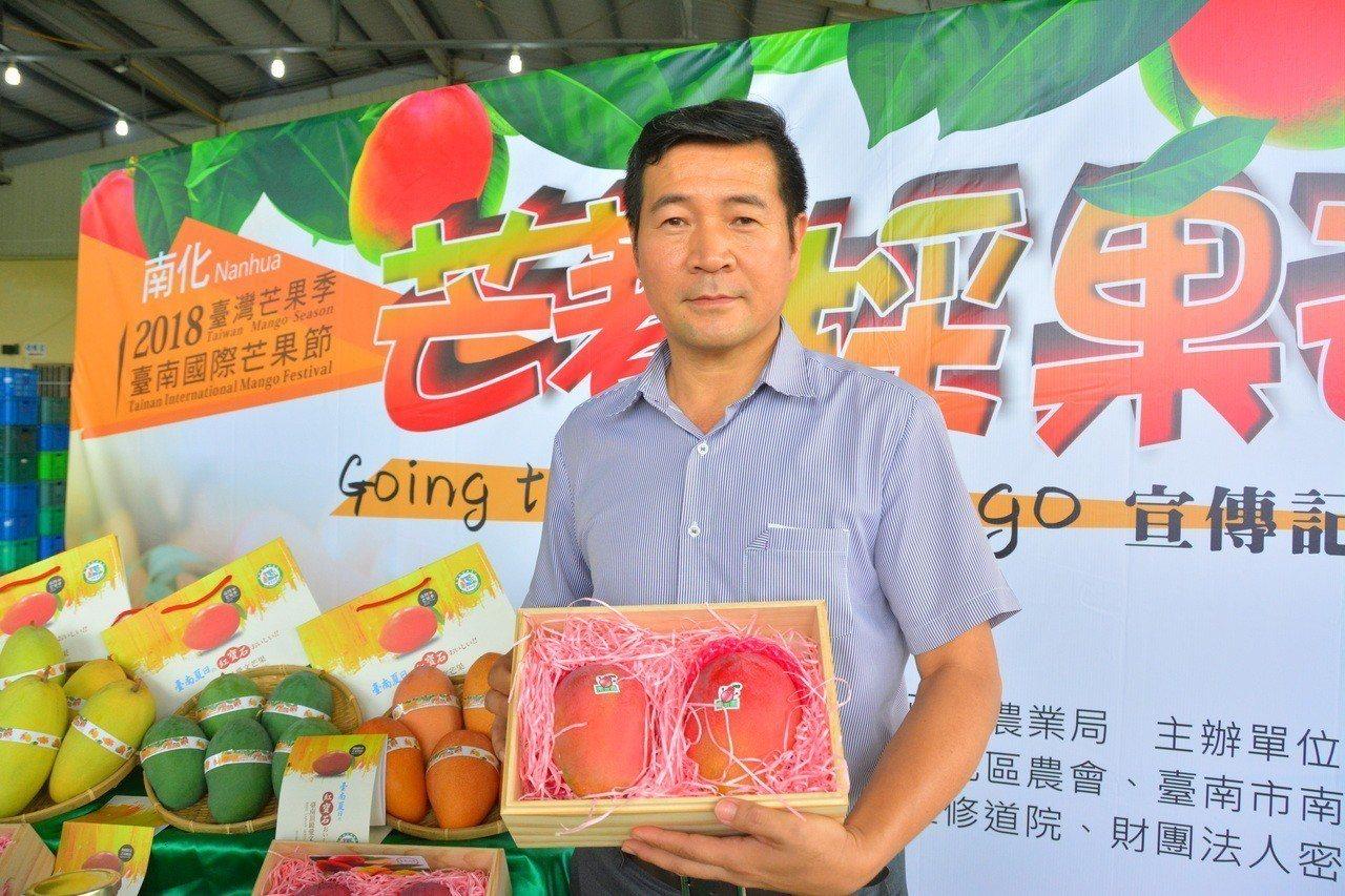 台南國際芒果節南化場推出「芒著採果趣」,農會總幹事溫進添提供「頂級愛文王」義賣。...