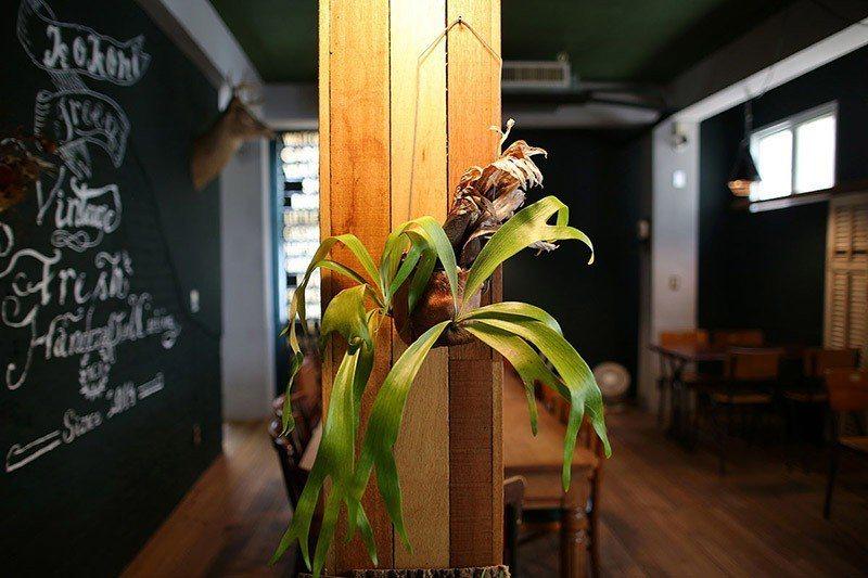 鹿角蕨狀似鹿角,跟店裡的鹿頭、手繪鹿圖相互呼應。