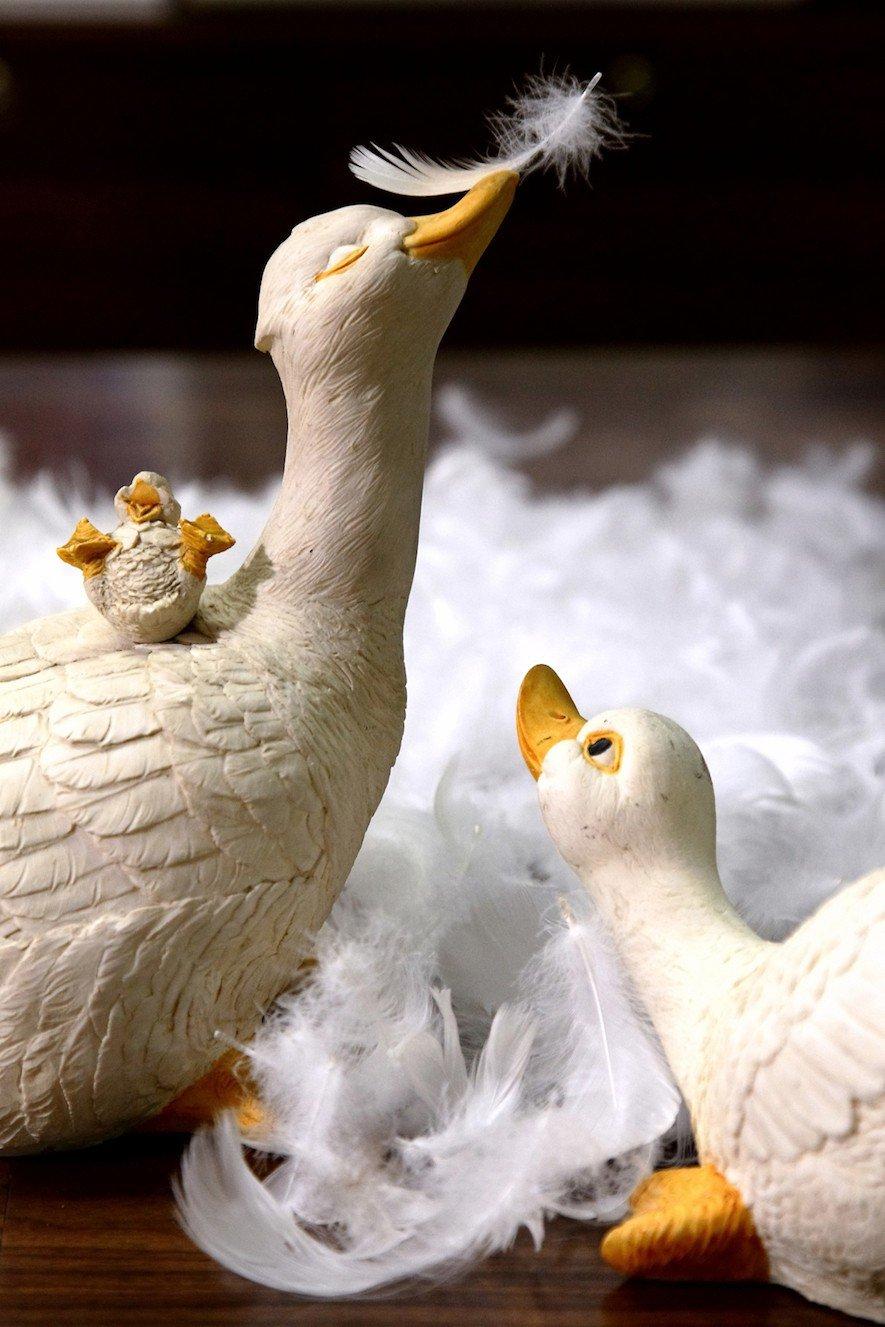 (圖) 皇室羽毛工房 我們的鵝媽媽