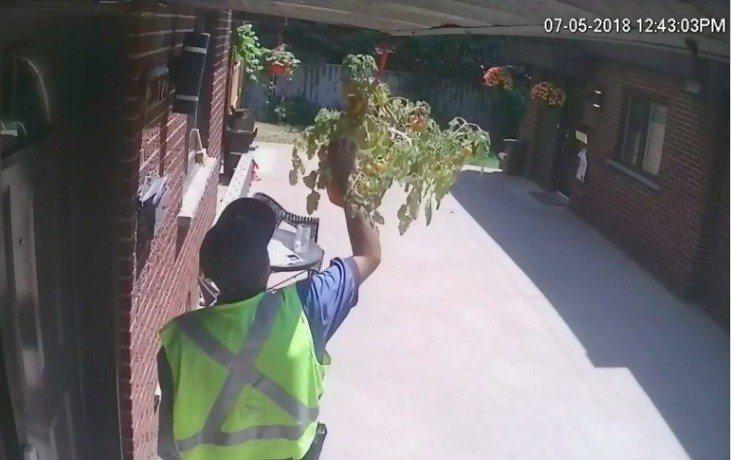 蒙特婁一對夫妻在自家大門外用垂吊花盆種番茄,日前發現偷吃果實的不是松鼠,竟是郵差...