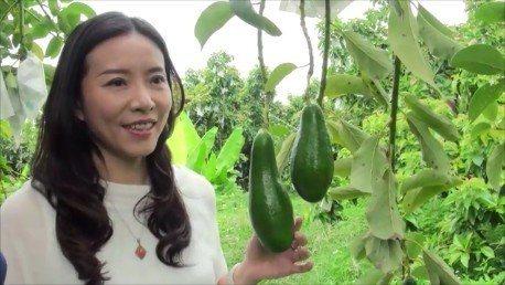 竹崎地區農會總幹事林孟怡表示將在嘉義竹崎和台北板橋,舉辦竹崎酪梨展售會。記者謝恩...