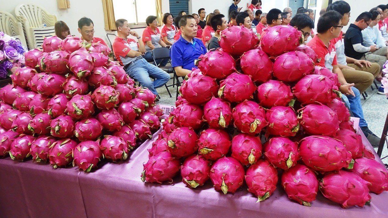 彰化縣二林鎮是台灣最早推廣、也是種植面積最多的紅龍果之鄉,今天鎮農會舉辦白肉、紅...