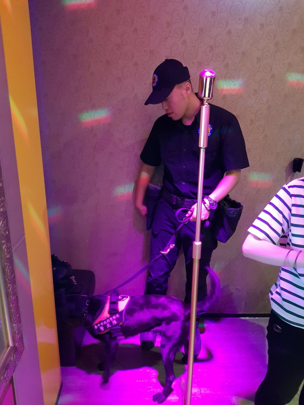 台中市警局今天凌晨突擊夜店,警犬Tiny嗅聞營業場所的各個角落,十分認真。記者陳...