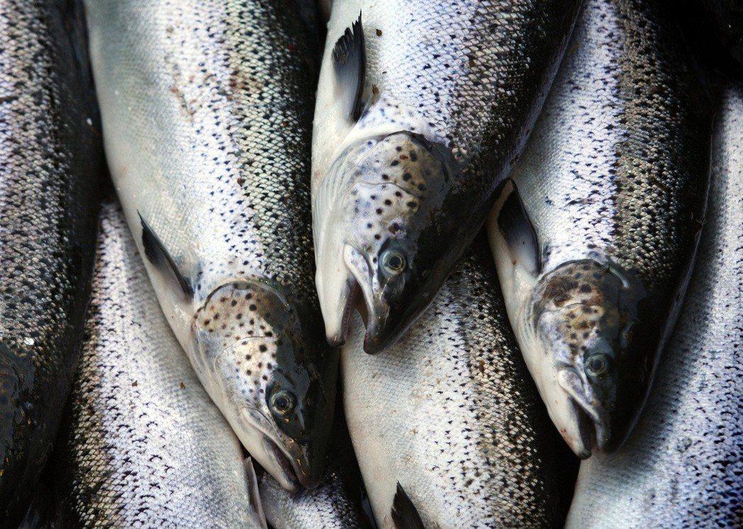 全球不斷成長的鮭魚需求已帶動挪威股市大盤上漲10%,相關類股更大漲20%。 美...