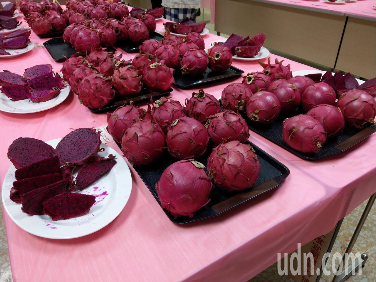 宜蘭舉辦紅龍果評鑑比賽,今年品質比去年好甜度更高,感受不到市場跌價的氣氛。 記者...